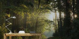 Malownicza, leśna fototapeta – krajobraz idealny do każdego wnętrza